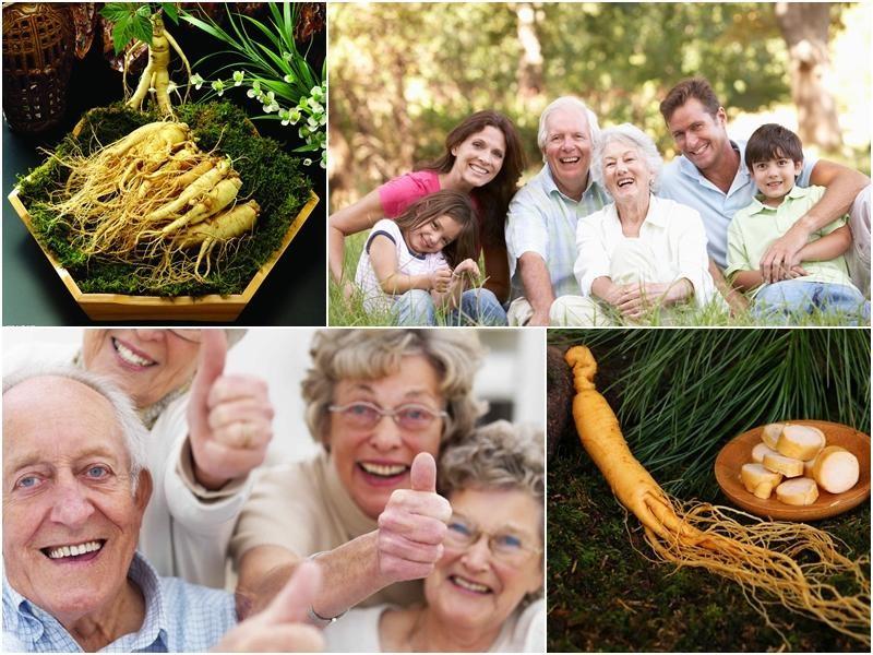 Sâm tươi mang đến nhiều lợi ích sức khỏe và đang sử dụng rộng rãi