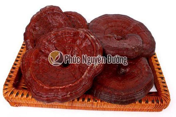 Công dụng tuyệt vời của nấm linh chi thượng hạng Hàn Quốc