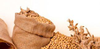 Uống mầm đậu nành như thế nào để giảm cân
