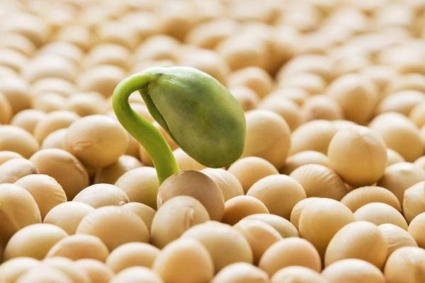 Mua bột mầm đậu nành ở đâu chất lượng tốt?