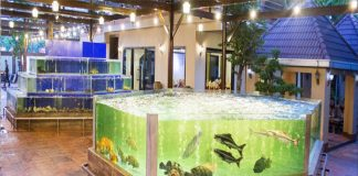 Bể cá hải sản cho nhà hàng bị đục nước, vệ sinh thế nào là đúng cách?