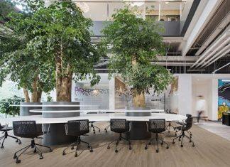 Thiết kế nội thất văn phòng kết hợp với các mảng xanh
